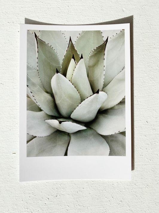 PAND LABEL KAART A6 | Succulent