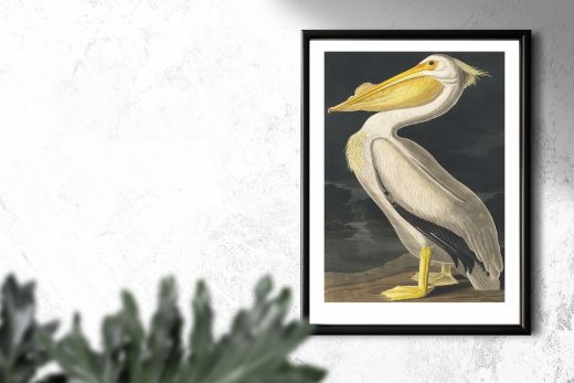 American White Pelican Interieur posters A3