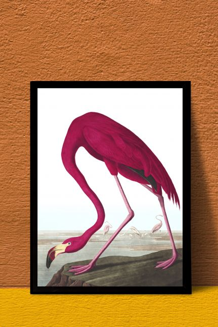 AMERICAN FLAMINGO INTERIEUR | A4