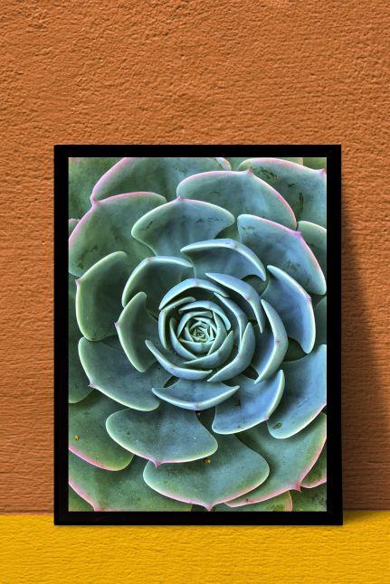 Succulent plant INTERIEUR KAART | A4