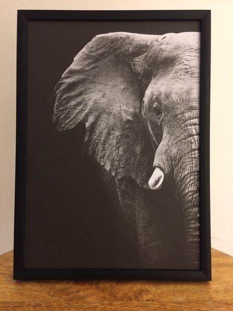 Elephant black foto kaart mat | a5
