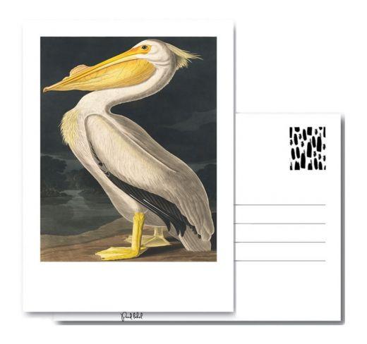 PAND LABEL KAART A6 | American Pelican